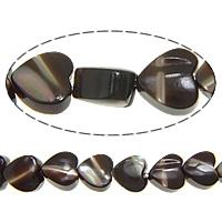 Trochus Beads